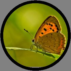 Observatoire PTD - Thématique : Environnement
