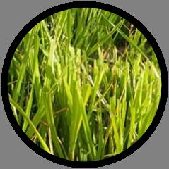 Observatoire PTD - Thématique : Herbe