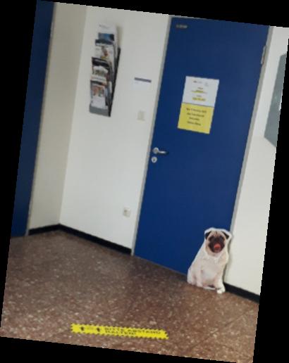 ….wie alle Hunde ist Alkuini neugierig und beschüffelt erst einmal das Sekretariat und sofort übersieht er den ersten Abstandshalter, obwohl er knallig gelb ist. Aber kein Problem, wir alle müssen uns noch daran gewöhnen!!