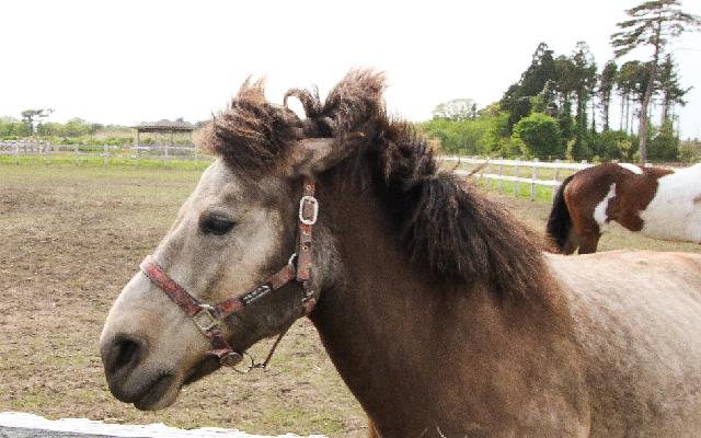 馬の耳 起こる