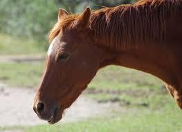 馬の耳 リラックス