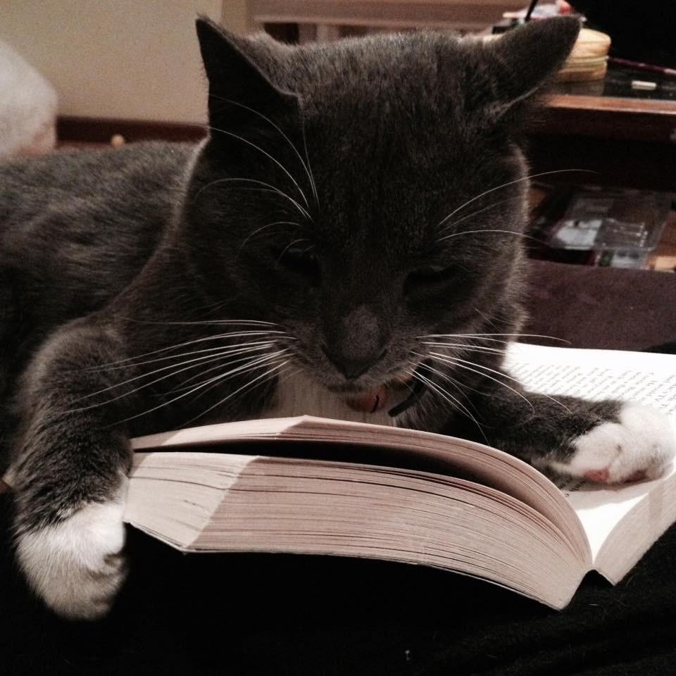 List of catgirls