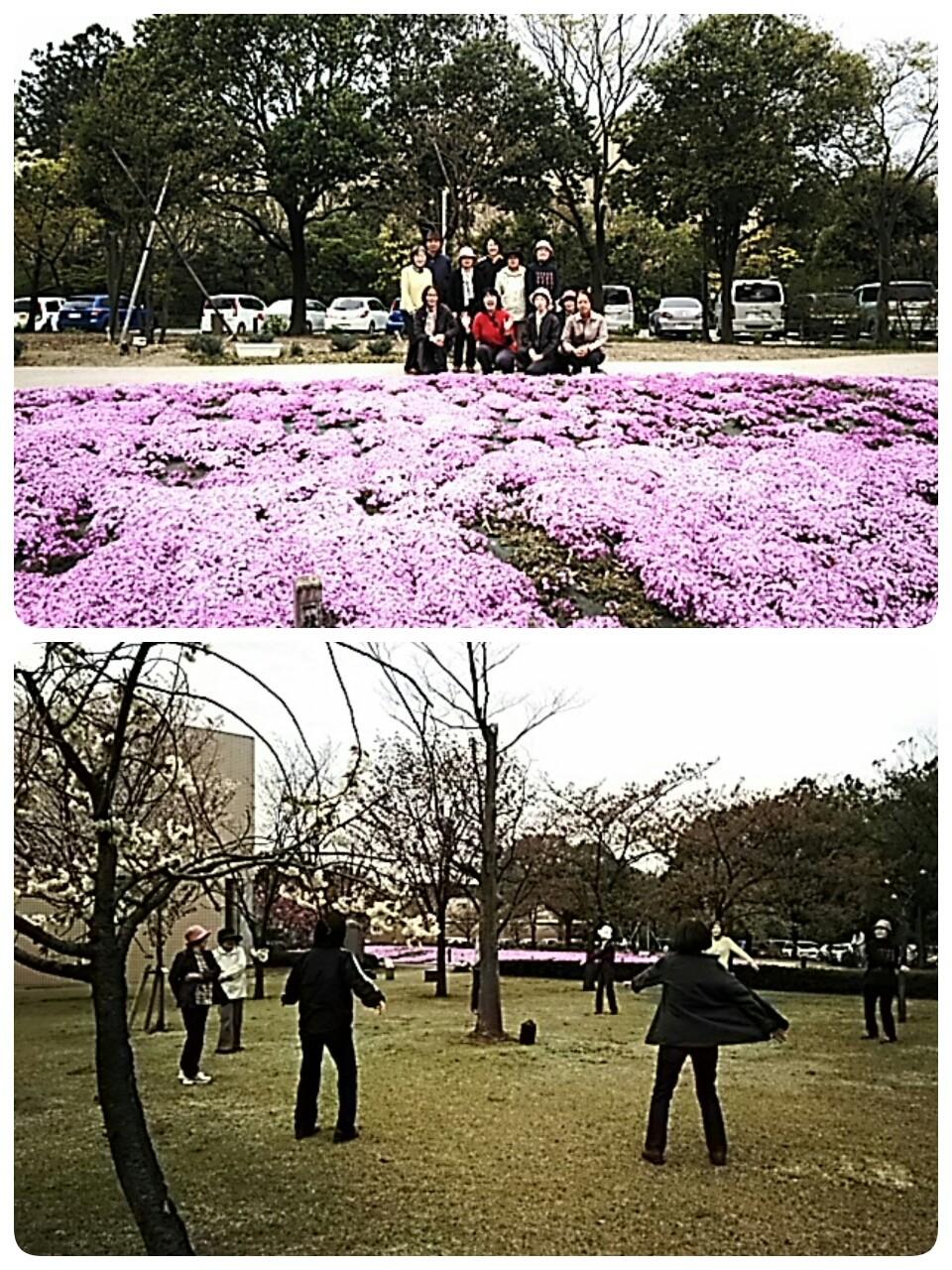 芝桜で、お花見太極拳🎵(*≧∀≦*)