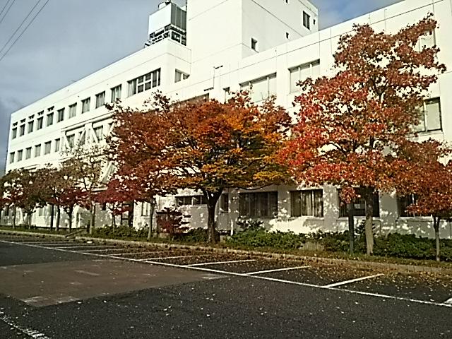 紅葉🍁青空🎵