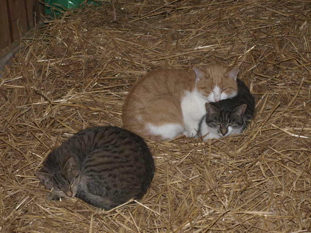 3 Katzen in Bittelbronn