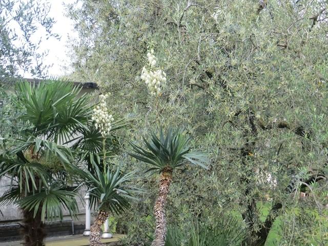 Unter Palmen und Olivenbäumen