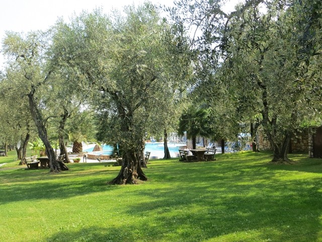 Olivenpark