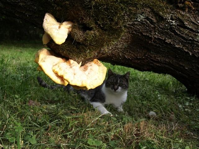 Und ein neugierige Katze