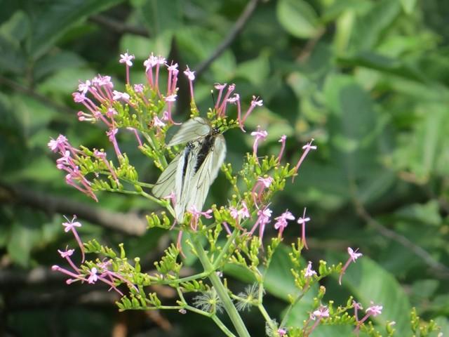 Komische Schmetterlinge