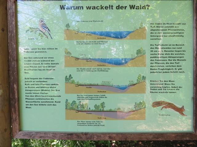 So hat die Natur das Wackelwädchen eingerichtet