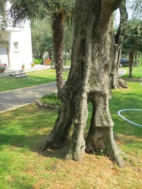 Die sind vielseitig ...... die Bäume ....