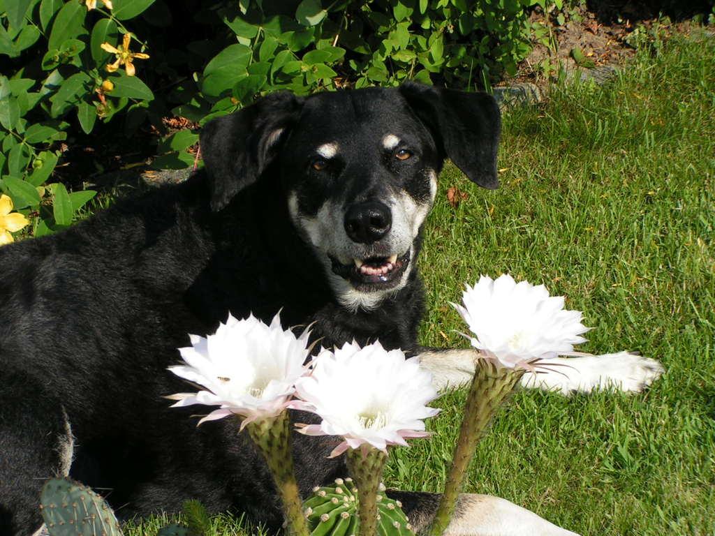 Bonny und die Kaktusblüte