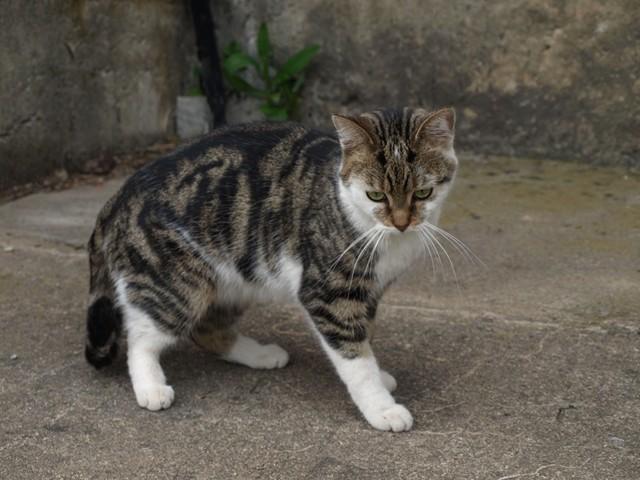 Eine neue Katze gibt es auch .......