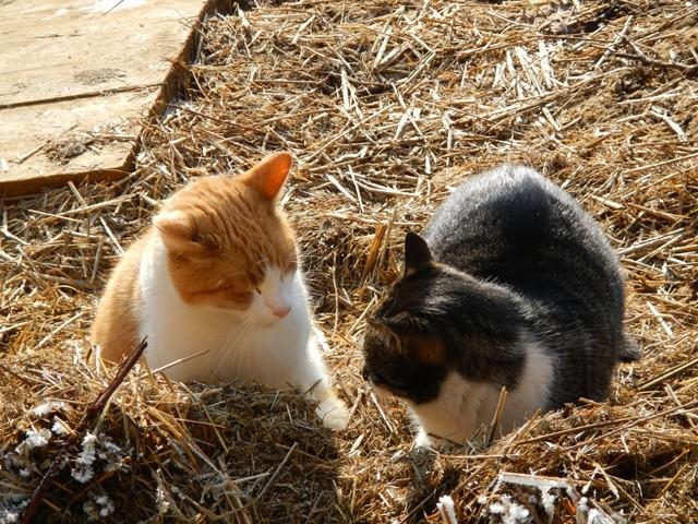 Chappi und Ronja