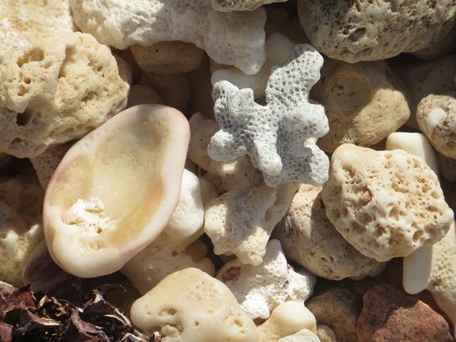 Abgebrochene Korallen, Muscheln und Co.