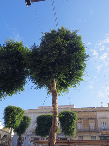 Stromleitung geht direkt durch den Baum
