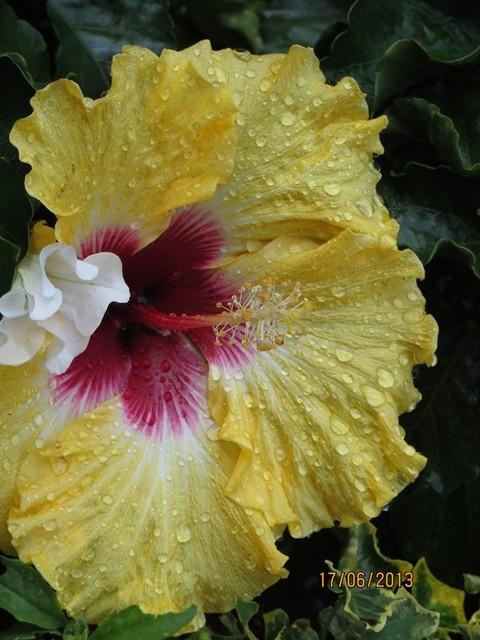 In der Nähe des Falles war die Blüten schön feucht