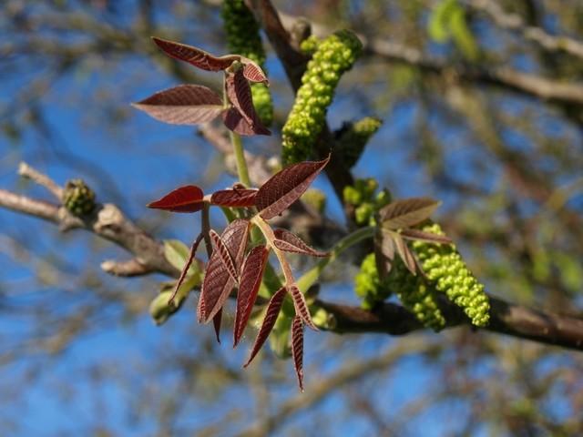 ....... bzw. die zahrten Blätter und Blüten