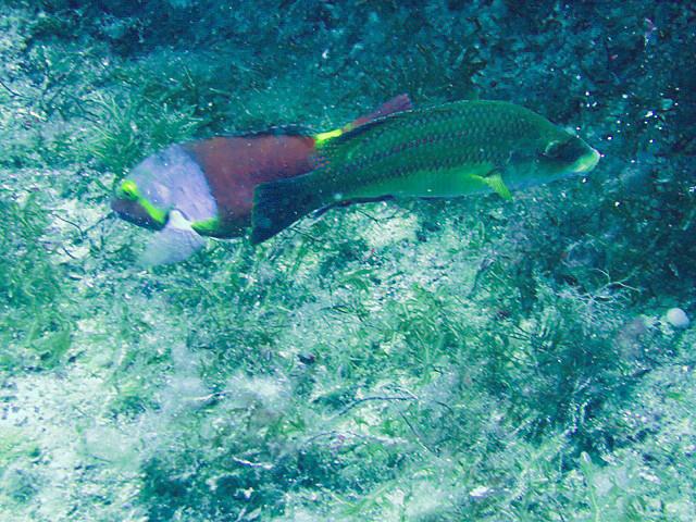 2 Typen unter Wasser
