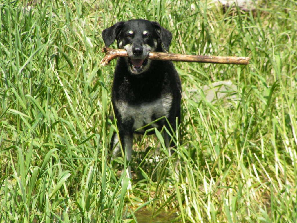 Bonny beim Stöckchen spielen