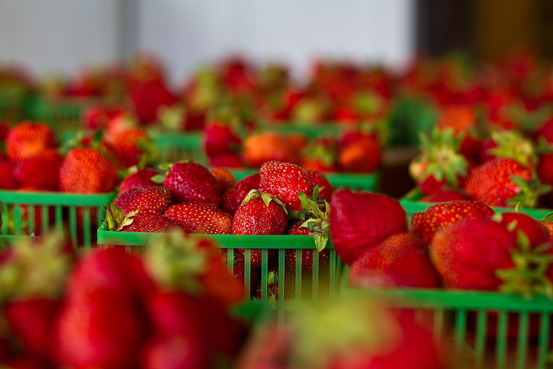 sonnengeküsste Erdbeeren