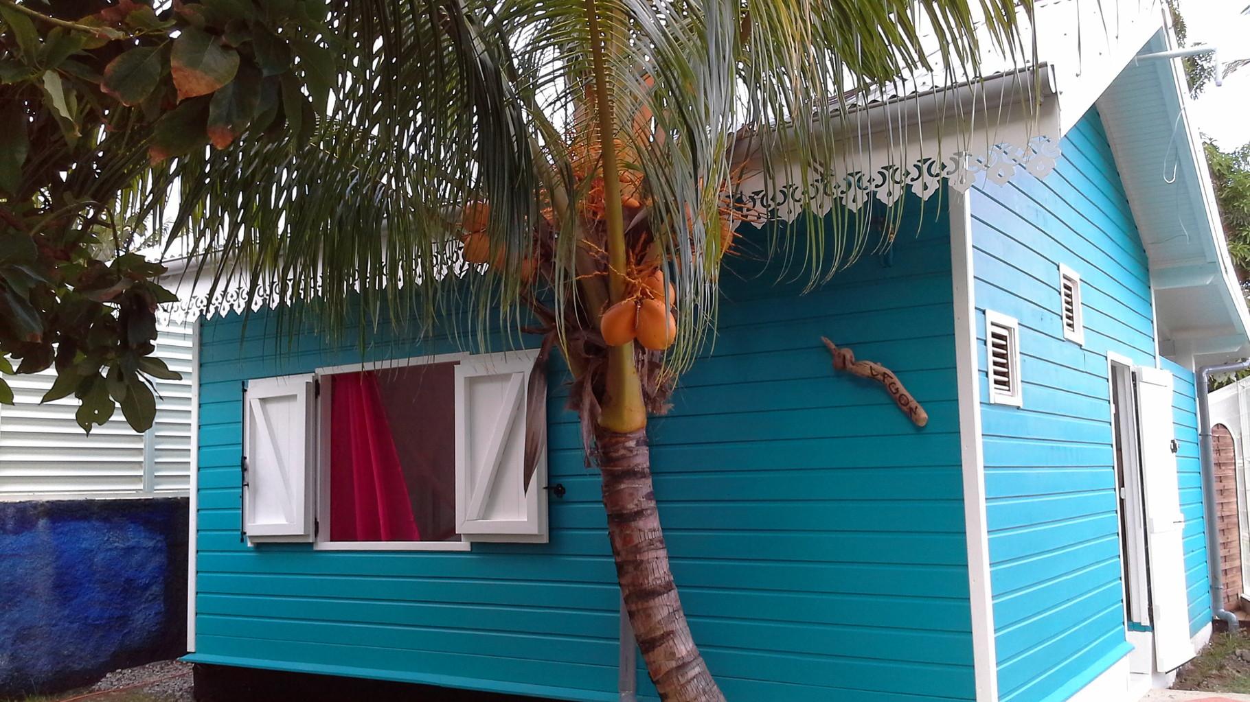 Sous un cocotier