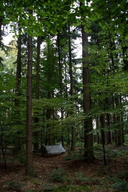 "Waldseminar ""Unter freiem Himmel"""