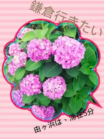 紫陽花祭りに