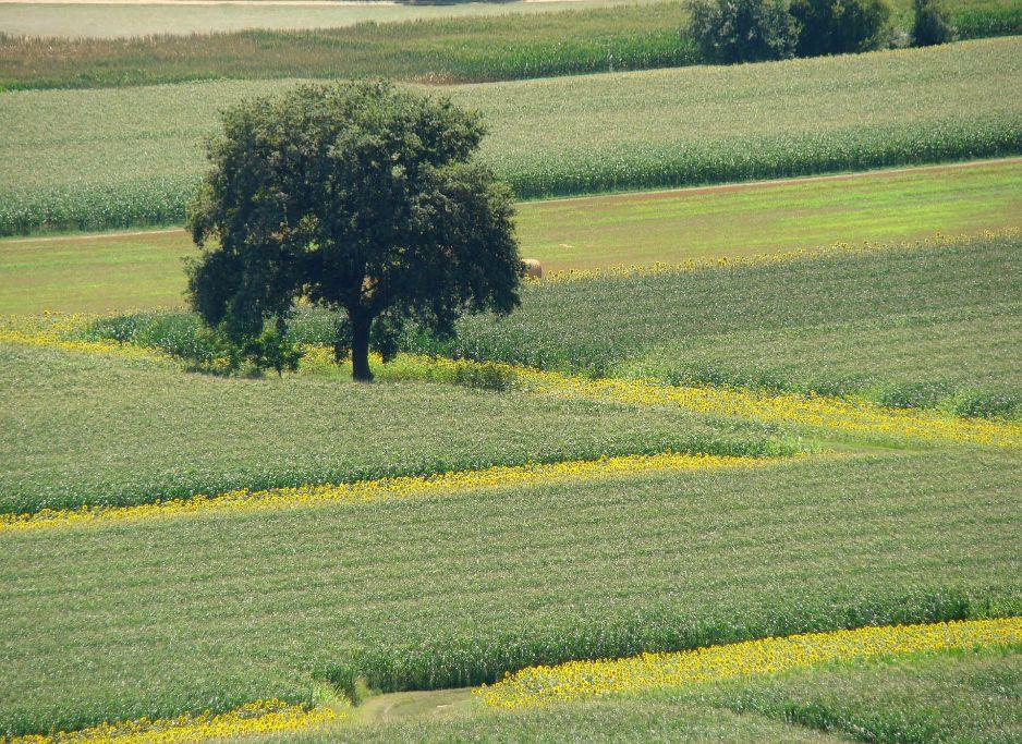 La Plaine de Calès