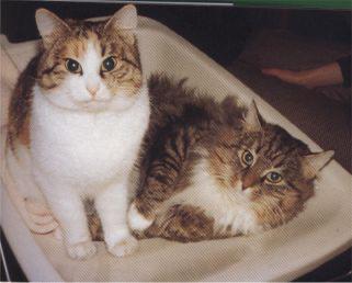 Pan's Truls met kortharige moeder Lucy