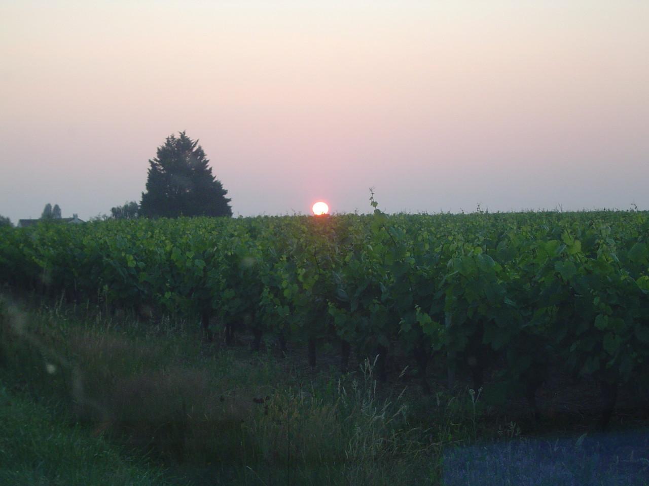 Ainsi que sur les vignes avoisinantes