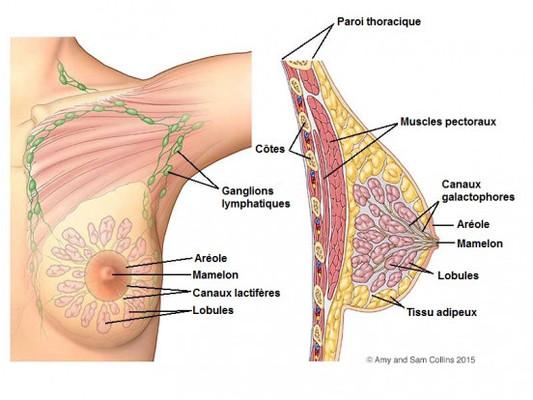 Massage des Seins pour prévenir le cancer du Sein