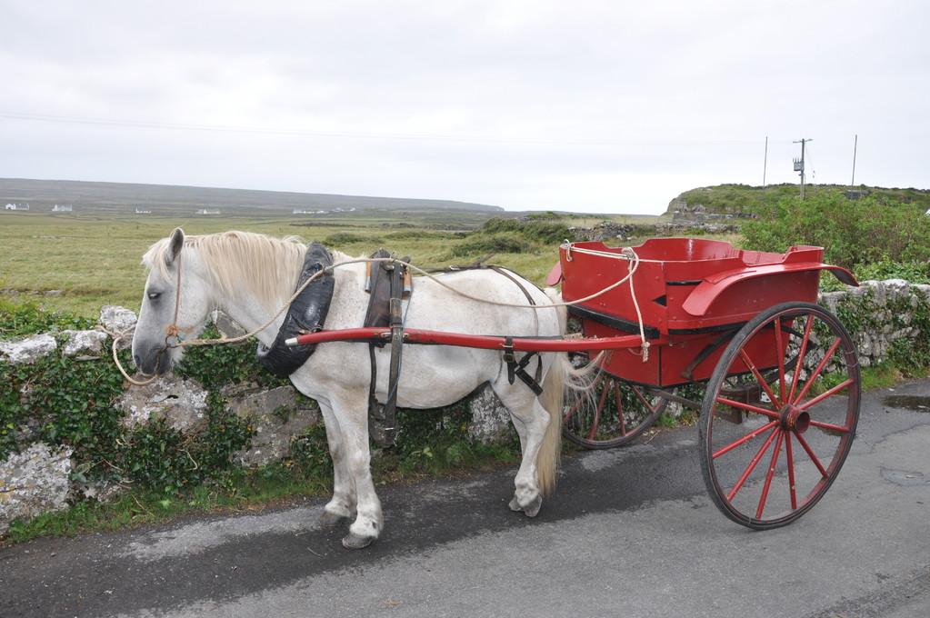 En route pour la découverte d'Inis Mór