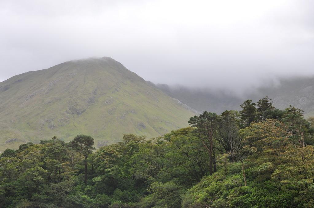 Colline bordée par la forêt