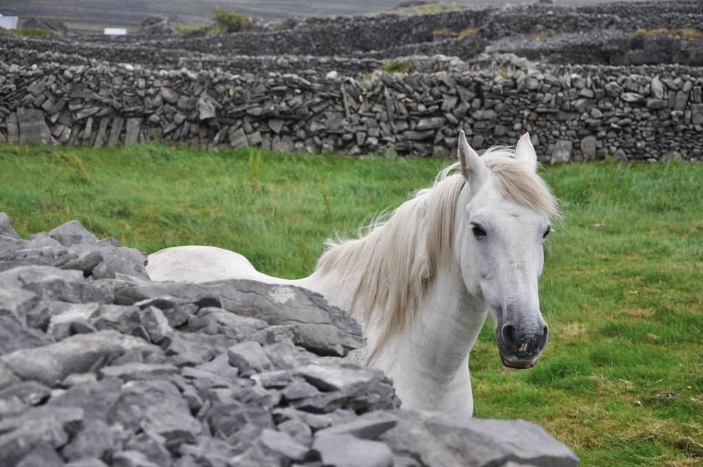 Vous avez le bonjour du cheval blanc.