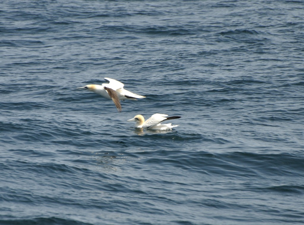 Deux fous dans la mer