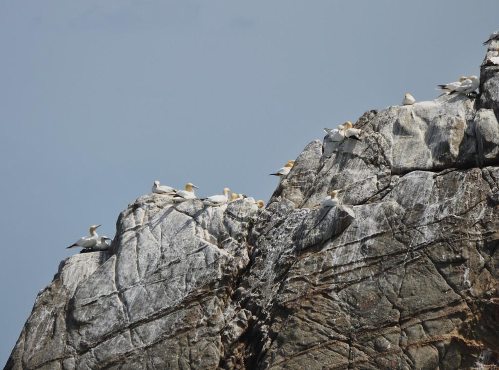 L'île Rouzic est aussi appelé l'île aux Oiseaux.