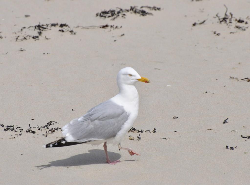 La plage du Trestaou, c'est mon domaine !