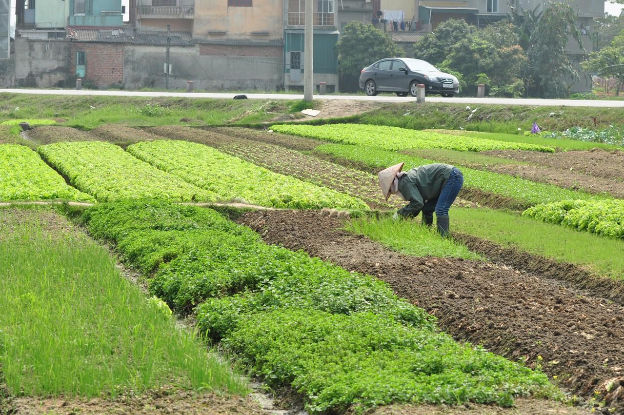 Hanoï : jardinier en plein travail