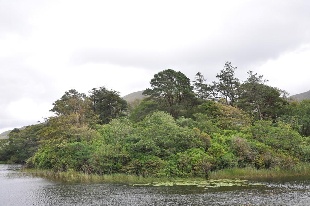 Paysage vert au bord de l'eau