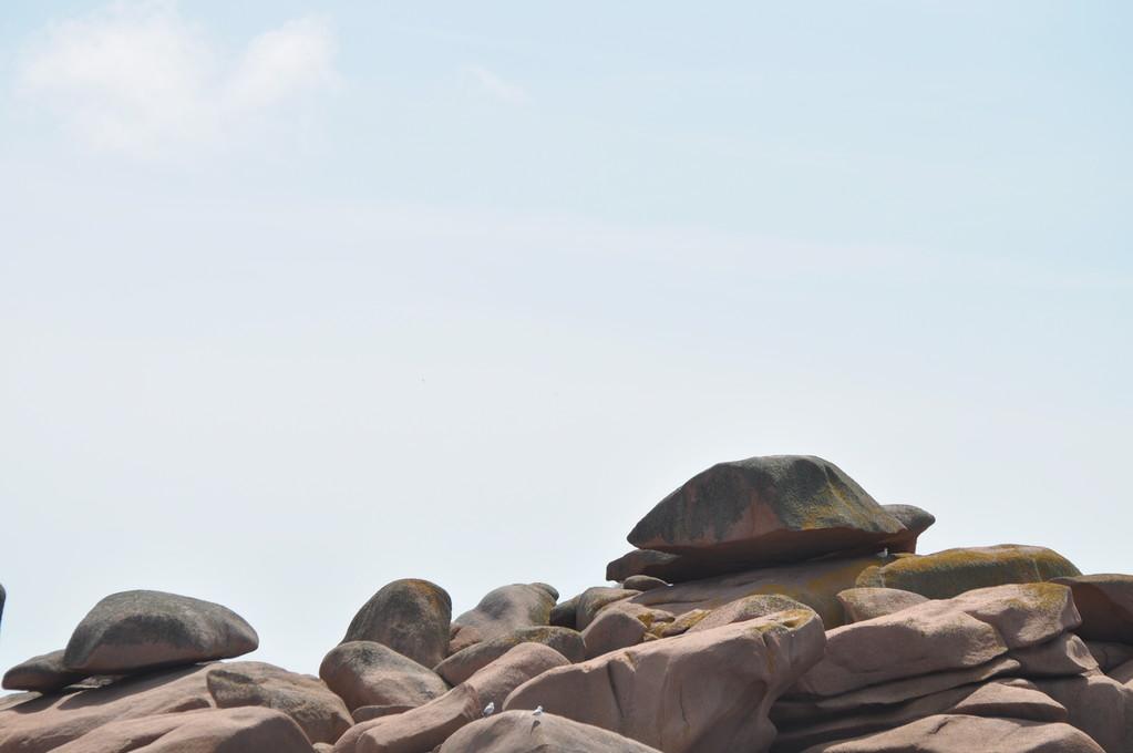 Tiens, voilà une tortue géante !