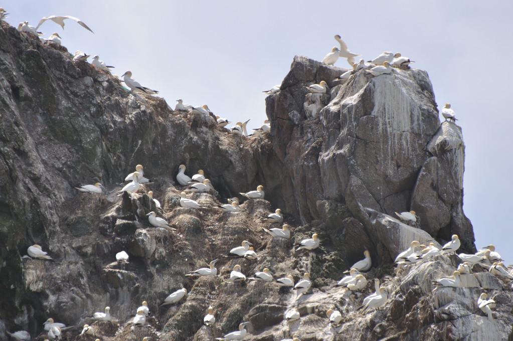 Des rochers bien peuplés !