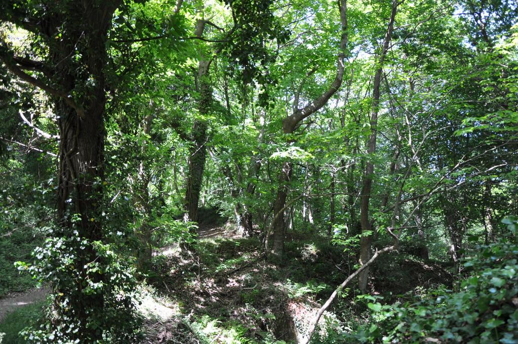 Forêt verdoyante