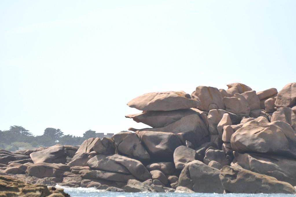 Coquille de roc ouvrant ses valves
