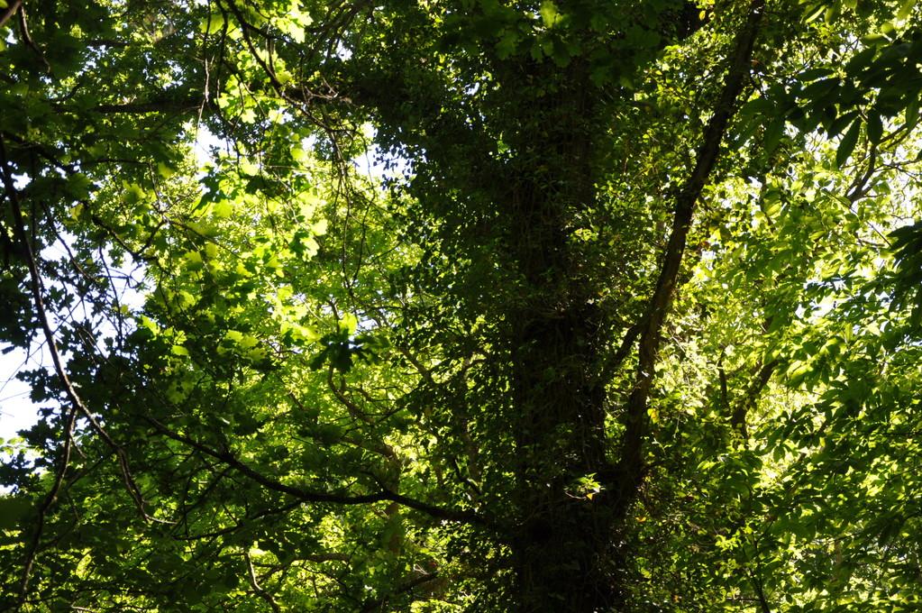 Forêt baignée de soleil