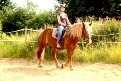 Pony reiten Bauernhofurlaub