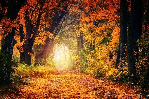 Herbstfest MABON - Ein Fest des DANKES