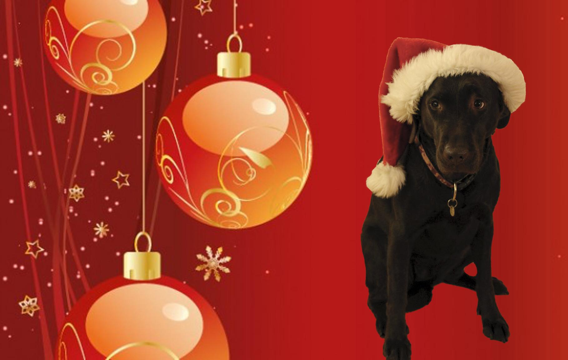 Weihnachten für Hunde