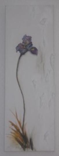 iris 12bx