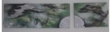 vert insembel 19b